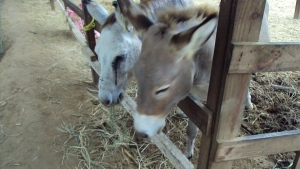 Donkeys are Cute too
